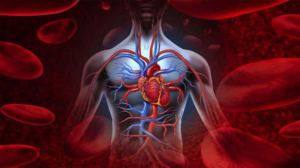 Mejora la circulación sanguínea