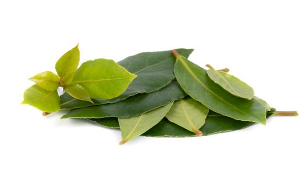 hojas verdes y frescas de laurel